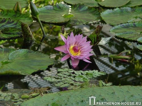 Уход за садовым прудом